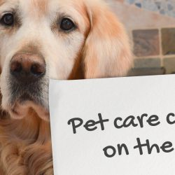 Pet-care-companies-on-the-SERPs